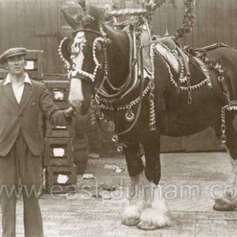 Bottlework's dray horse ready for the parade, possibly the coronation celebrations in 1911.