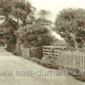 """Byron's Walk looking east to the Hall Station. """"Byrons holly bushes"""" at right"""