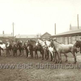 Pit ponies in Seaham Colliery stable yard in 1927. Pit ponies, never used in Vane tempest were still at Dawdon and Seaham Collieries until the mid 1960's