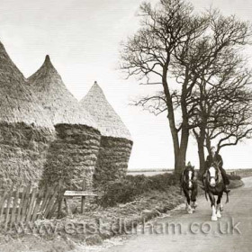 Ernie Thompson riding west past the stackyard at Sharpley Hall Farm about half a mile west of Seaton. C 1930.        The Thompsons are reputed to have lived in Seaton for at least a thousand years, John Thompson and his wife Margaret and their son Ralph and his family still live in the village today. Village folklore says that a ghostly black dog is only seen and heard howling when a Thompson is about to die.        There are five articles on Seaton in the C A Smith Articles in the History section, one of which describes the village ghosts. Interestingly two people have told me how they came across the other Seaton ghost, the grey lady, one, after slowing his car to cross the railway line at Seaton bank top near Darkies Plantation had a terrifying trip for half a mile or so with her sitting on the bonnet, the second was my son who in 1985 was travelling from Houghton to Seaton in the early hours of the morning on his motorbike (sober) when she crossed the road in front of him. Neither had heard of the ghost before they met her!!