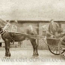 TAXI....John Dryden and Son, trap in the yard of Dene House Farm in Castlereagh Rd.     In 1890 John William Dryden was at Field House Farm, in 1894 and 1899 he was listed at Dene House Farm. By 1910 he was listed as farming Dene House Fm and Hall Fm and also a dairyman.